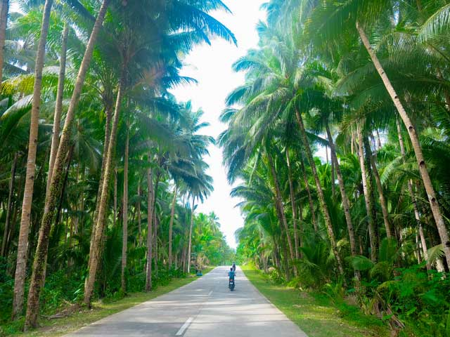 Coconut Palm Forest