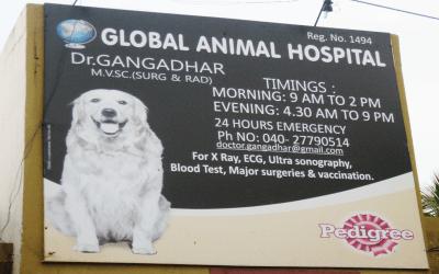 Global Animal Hospital
