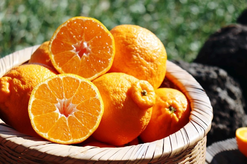 漢拏峰是濟州島獨有的水果。