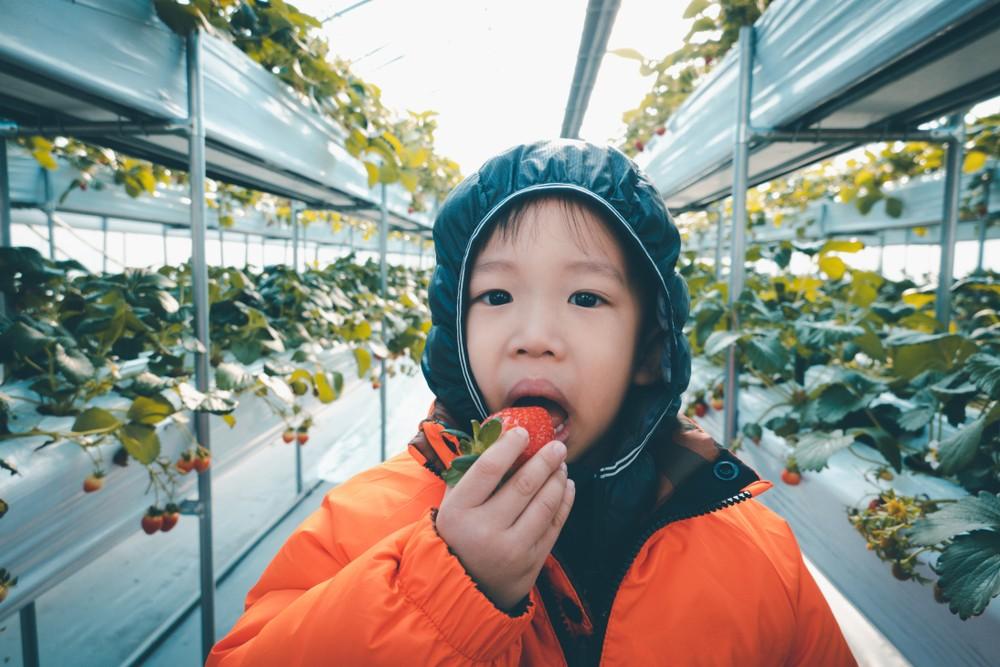 韓國水果愈來愈受歡迎,直頭能與日本水果匹敵。