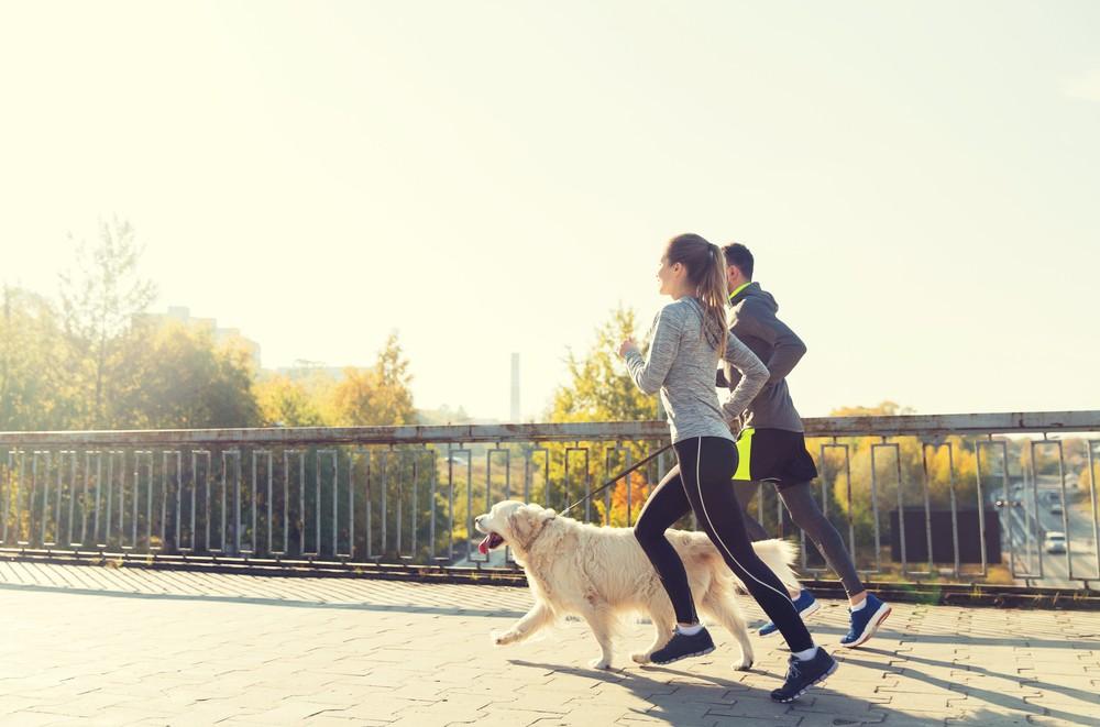 有養狗的比起沒養狗的人運動量更多。