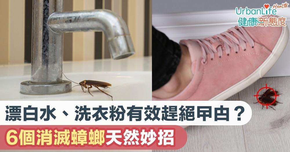 【消滅曱甴】漂白水、洗衣粉有效趕絕曱甴?6個消滅蟑螂天然妙招
