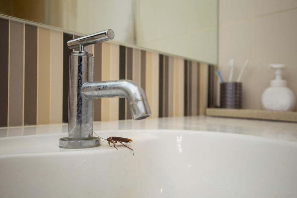 蟑螂喜歡潮濕髒亂的環境,所以浴室的水龍頭記得要扭緊。