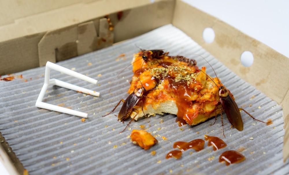 蟑螂,在香港也被稱為「曱甴」或「小強」,生命力極強。
