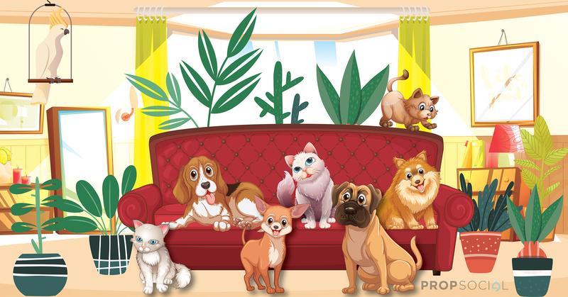 Pets 01 truncate