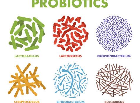 益生菌相關問題:益生菌種類、功效與怎麼吃總整理