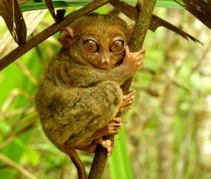眼鏡猴保育區