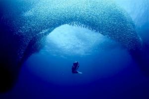 沙丁魚風暴-墨寶