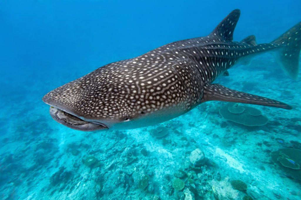 歐斯陸與鯨鯊共游住宿推薦