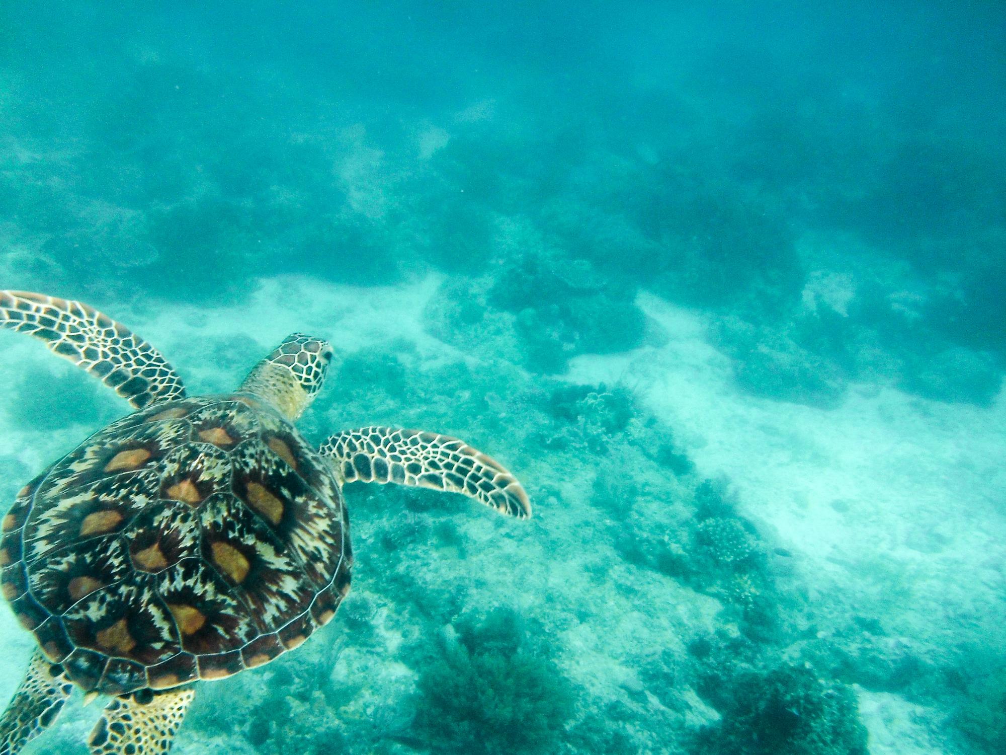 員工旅遊行程推薦-巴里卡薩島
