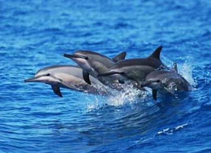 海豚追蹤首選菲趣國際旅行社五天四夜旅行團