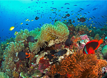 熱帶魚共游首選菲趣國際旅行社五天四夜旅行團