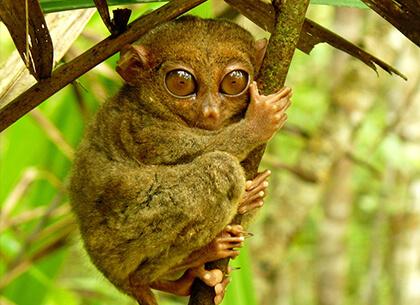 宿霧員工旅遊眼鏡猴保護區