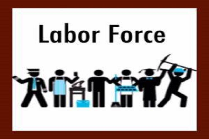periodic labour force survey (plfs)