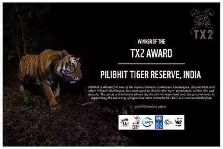 pilibhit tiger reserve receives