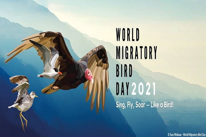 world migratory bird day: 08 may