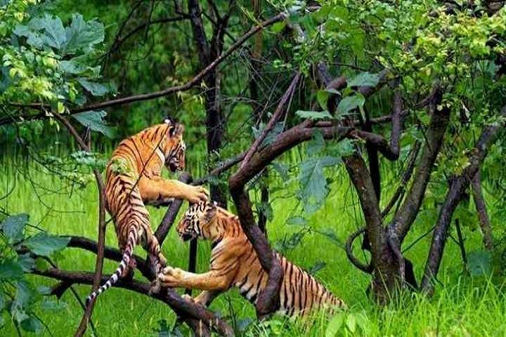 m.m. wildlife sanctuary to be tiger