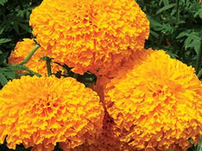 mega-orange