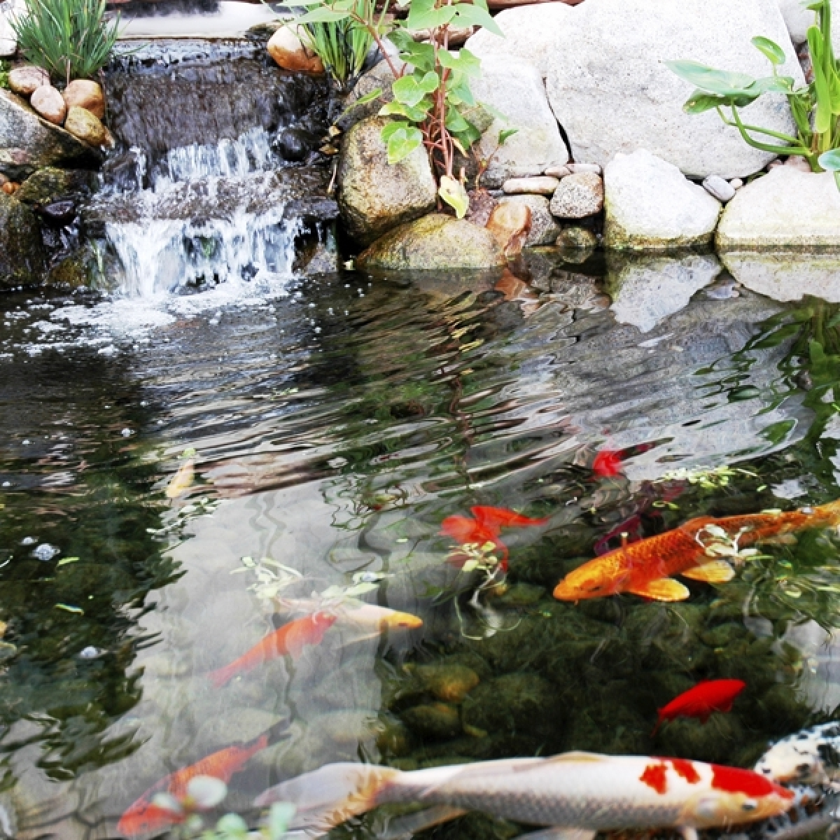 Fish in the pond dating site