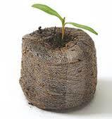 Coir Jiffy Pellet with Seedling.jpg