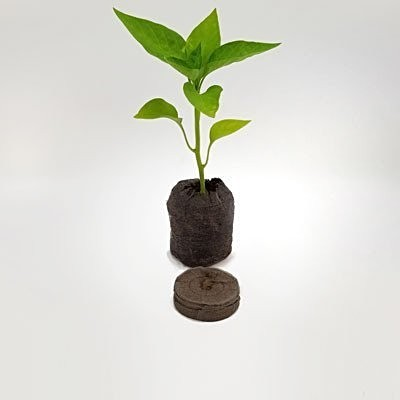 Jiffy Pellet & Jiffy with Chilli Seedling 1.jpg