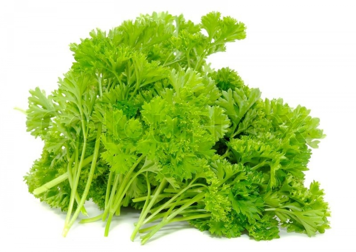 Curly Parsley Seeds (Petroselinum Crispum) – My Lestary Seeds