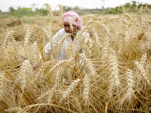 Crop cover needs separate set of rules: experts