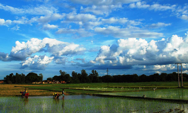 Bumper foodgrain production expected due to normal monsoon this year