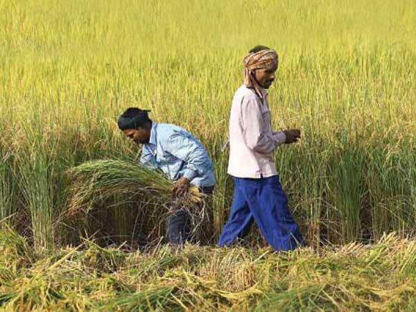 Jump in Rural Core Inflation