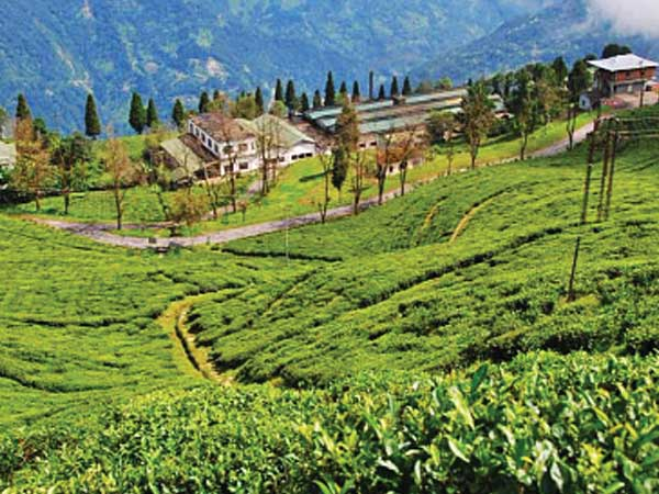 A resort for tea lovers