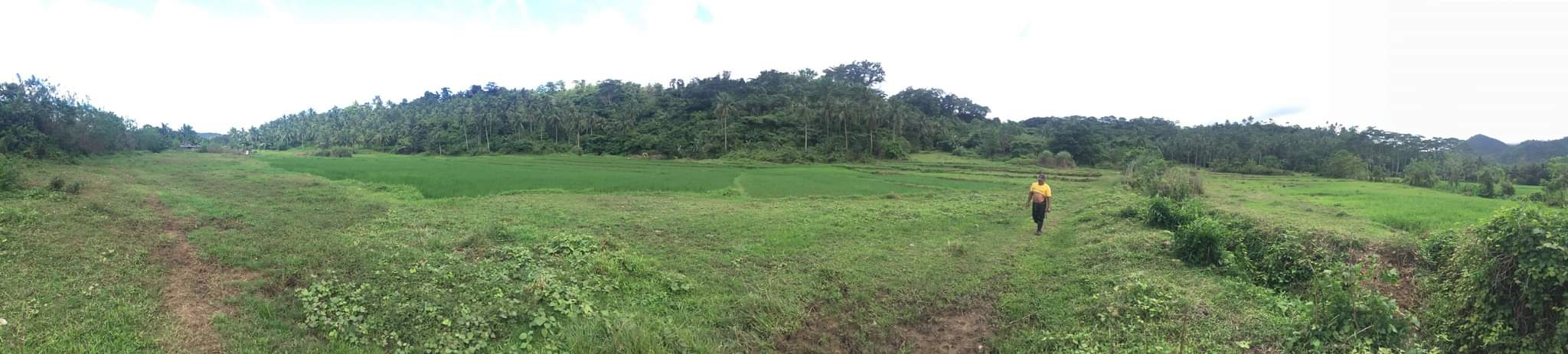 20 hectares lot for sale