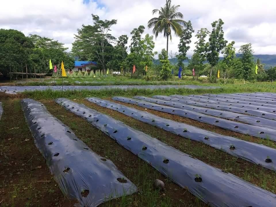 farm lot