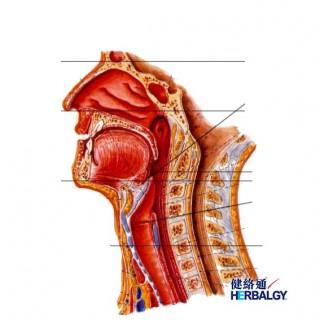 【喉咙痛】(Pharyngitis)