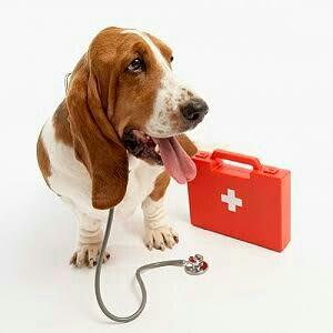 Dogs Care in Besant Nagar - by PETS 101, Chennai