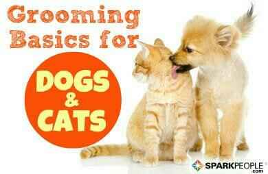 Best Pets Spa in Villivakkam. - by CATS&DOGS, Chennai