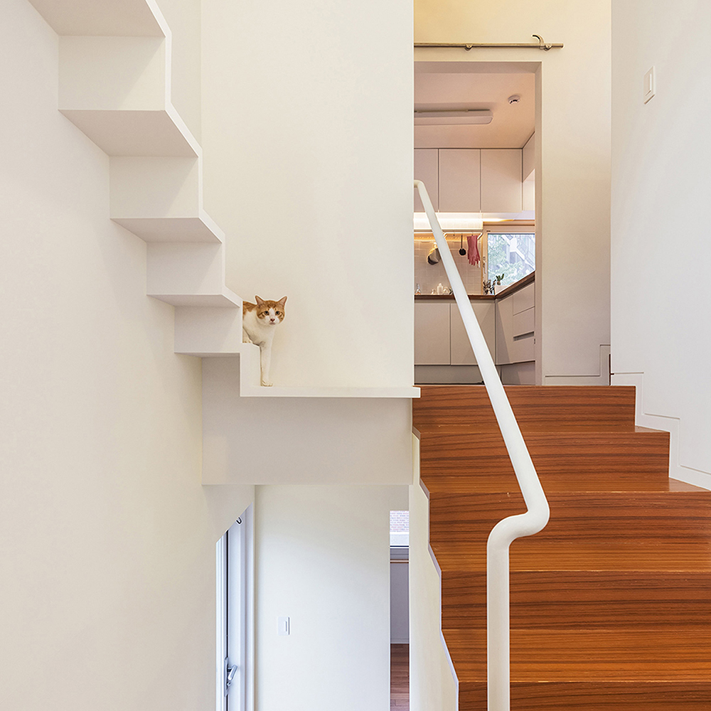 house-in-seoul-obba-house-architecture-for-cats_dezeen_1704_col_4