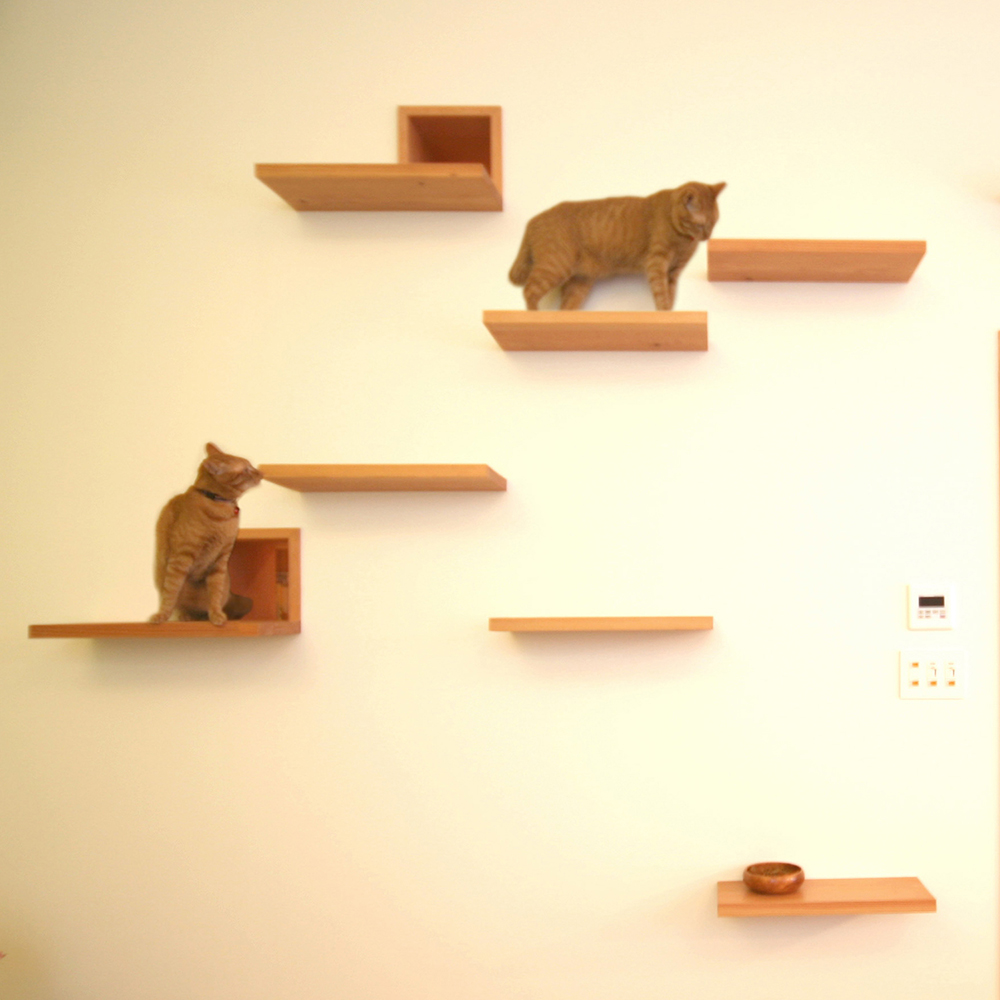the-cat-house-key-operation-house-architecture-for-cats_dezeen_1704_col_4