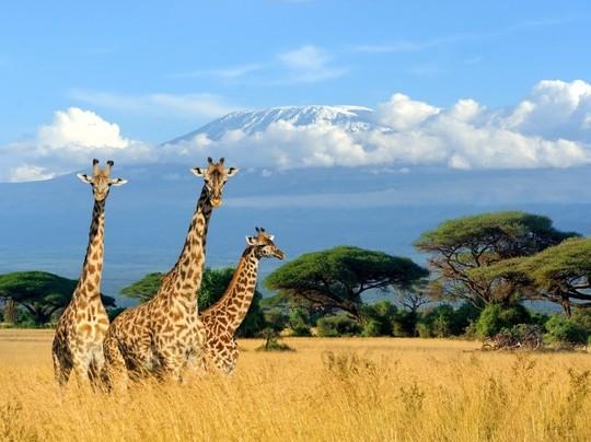 เที่ยวไปในโลกกว้าง ตะลุยแดนซาฟารีที่แอฟริกา