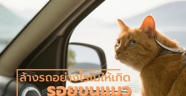 ล้างรถอย่างไรไม่ให้เกิดรอยขนแมว!