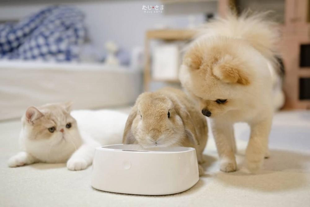 Mumaru博美犬Muji異國短毛貓和兔子Miku