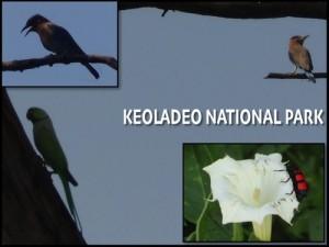 Keoladeo National Park – Bharatpur