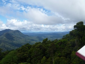 Gondwana Rainforests of Australia