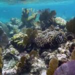 Belize Barrier Reef Reserve