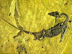 Unique fossils that can be studied over time!