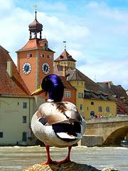 Quack, Welcome to Regensburg!