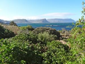 Landscape of the Cape Peninsula