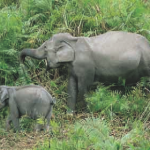 Elephants feeding at Kaziranga National Park, Assam
