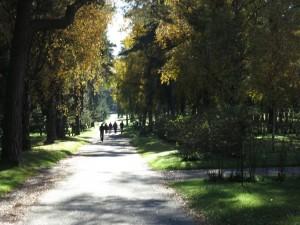 Forest Gravyard|Skogskyrkogården Stockholm
