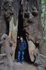 Redwood National and State Park Visit