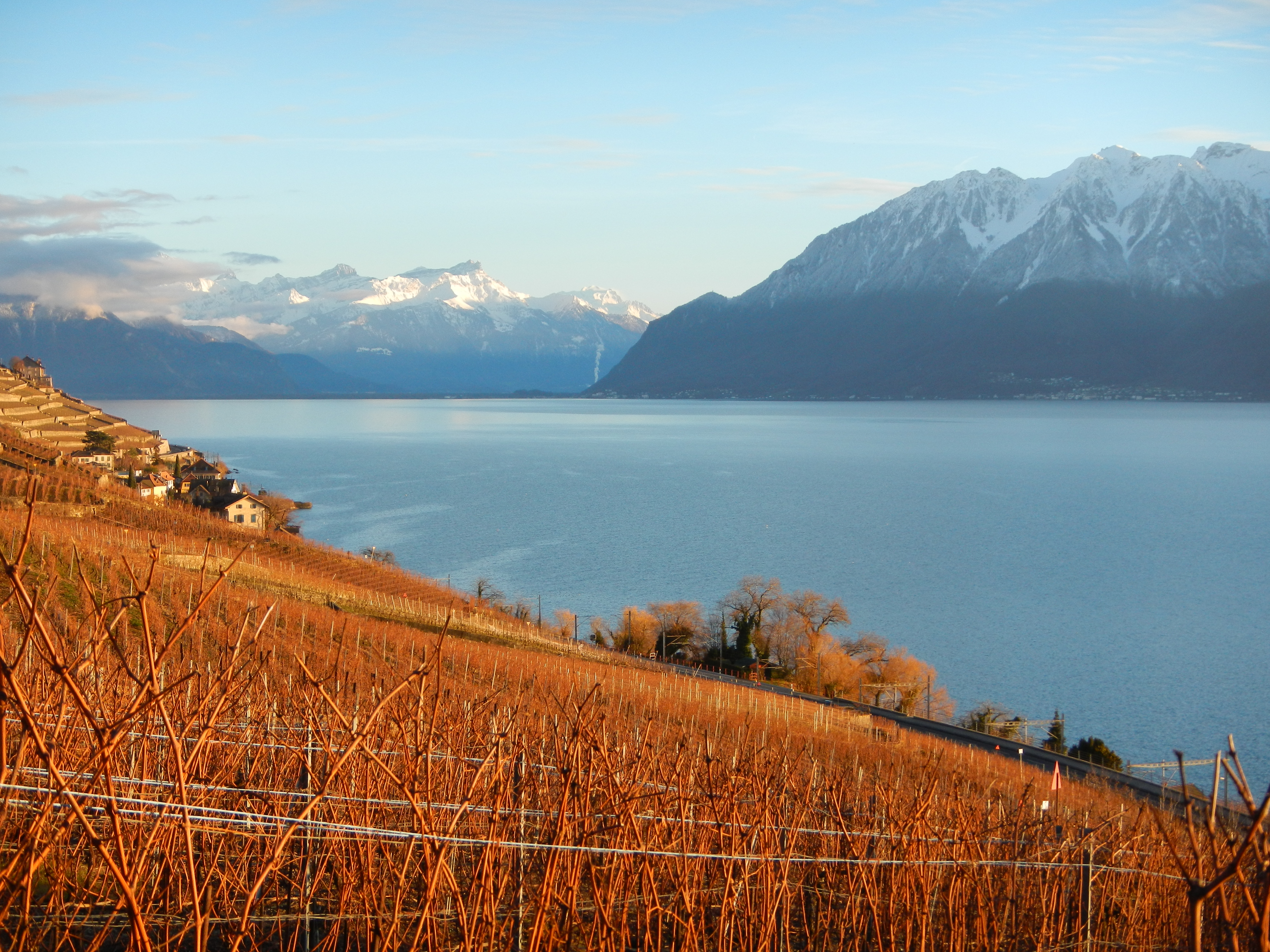 Winter shadows Lavaux, Vineyard Terraces - Switzerland